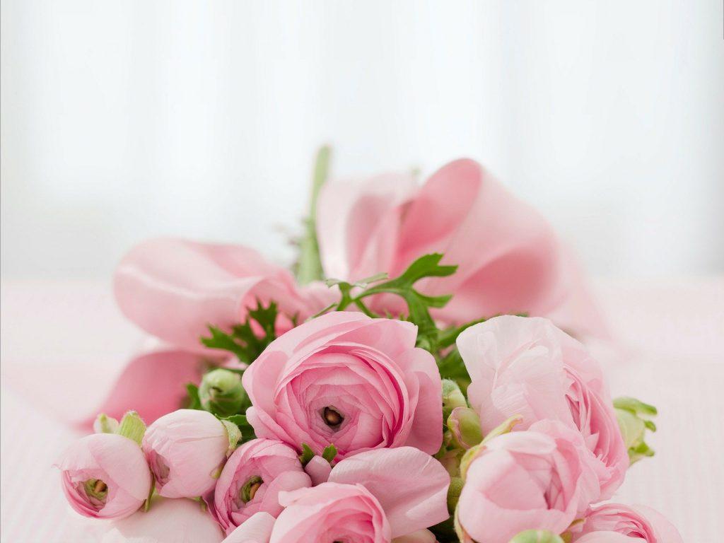 flores rosa rosam floristeria