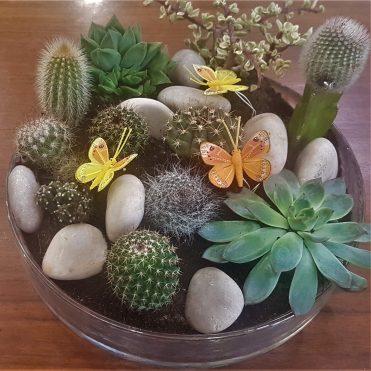 Floristería Rosa Rosam - Centro de cactus
