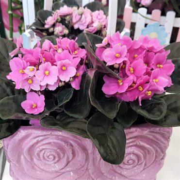 Floristería Rosa Rosam - Centro de violetas