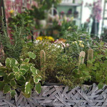 Floristería Rosa Rosam - Cesta de hierbas aromáticas